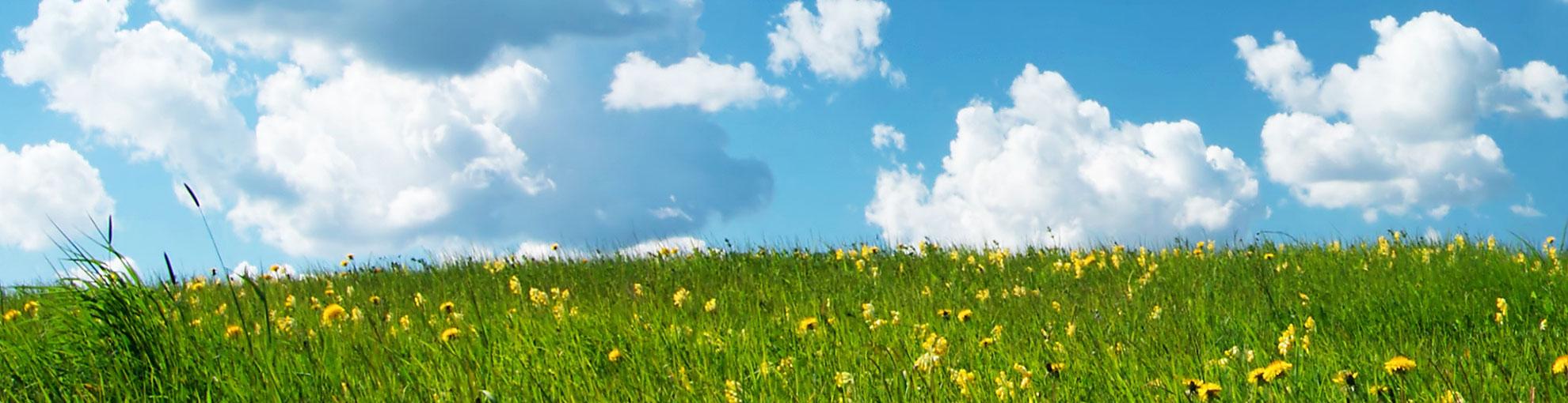 Eine Blumenwiese, darüber Himmel mit Wolken - Hintergrundbild des Sliders der Seite Texter-Blog