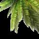 Eine Palme - Sliderelement der Seite Schätze