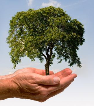 Eine Hand in der ein Baum wächst